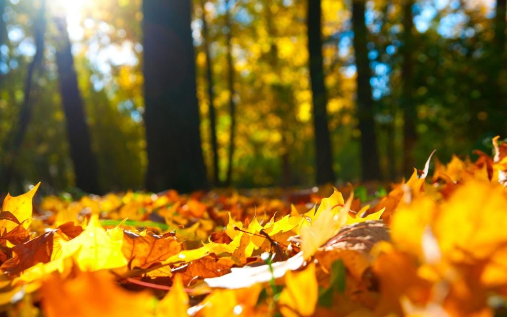 Autumn-Ground
