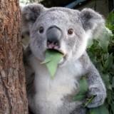 top-rpg-lists-no-ultima-koala